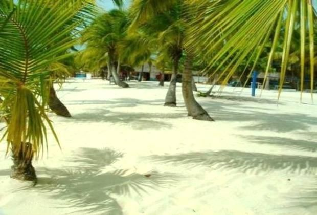 Catuano - white beach and large palm trees