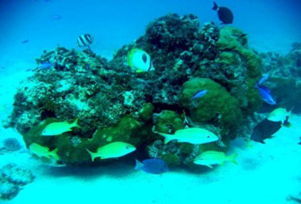 coral_piers.jpg