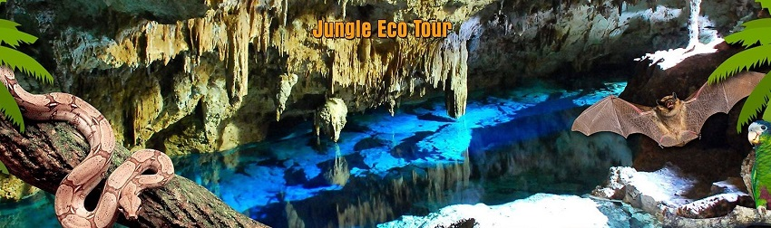 Discover the jungle with the Jungle Eco Tour from Punta Cana and Bayahibe