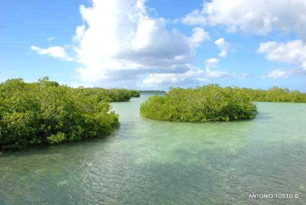 Crossing the mangrove forest Bayahibe