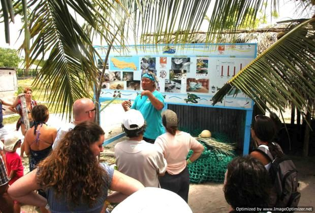 The sea turtle project in Mano Juan