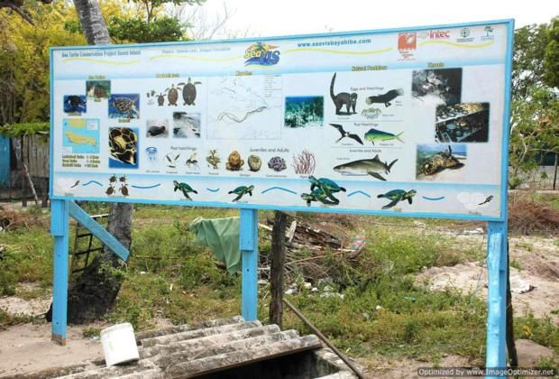 Information about the sea  										turtle project in Mano Juan