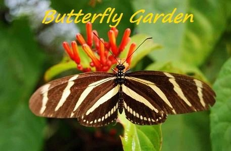 Butterfly Garden large