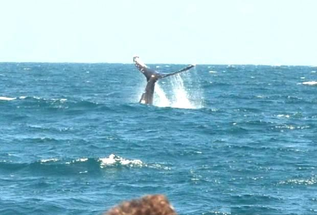 Punta Cana - whale watching - jump close to boat