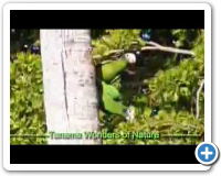 Tanama Wonders Of Nature Tour